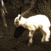 El Tafí del Valle de siempre en un video clip - TafidelValle.com