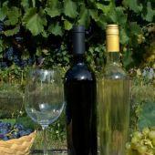 Entre cerros y viñedos, cómo es la Ruta del Vino de Tucumán - TafidelValle.com